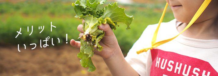 野菜を再生するメリット