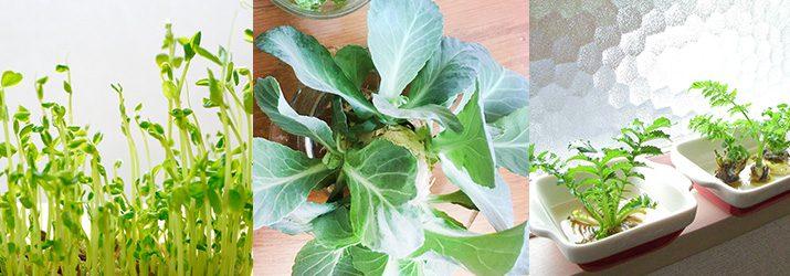 再生野菜の例