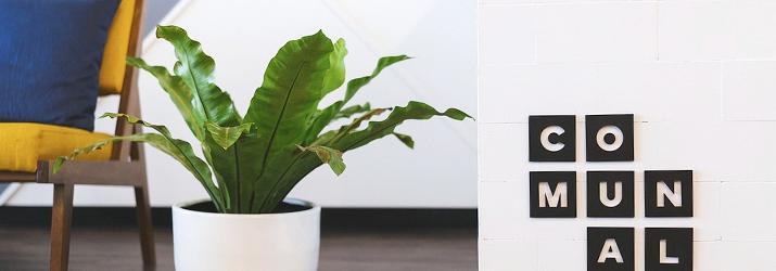 植物の効果